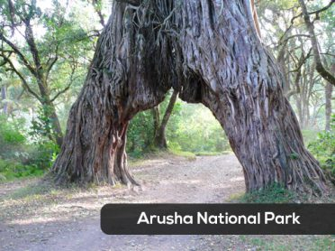 Arusha-NP-1A